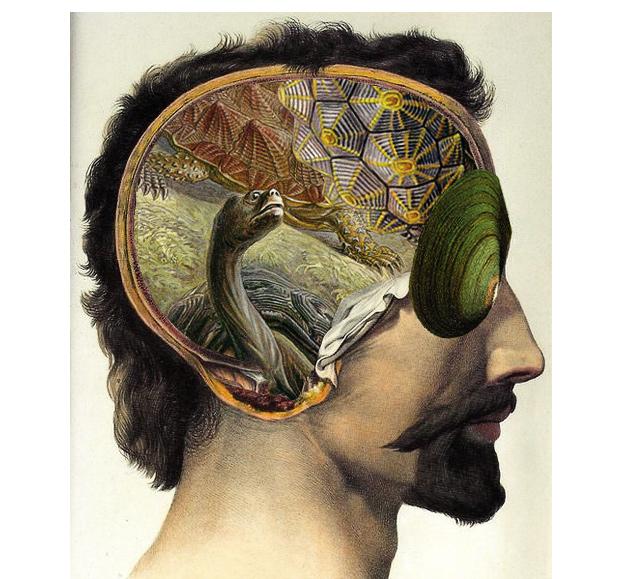 Ihmisen, raakun ja kilpikonnan yhteneväisyydestä